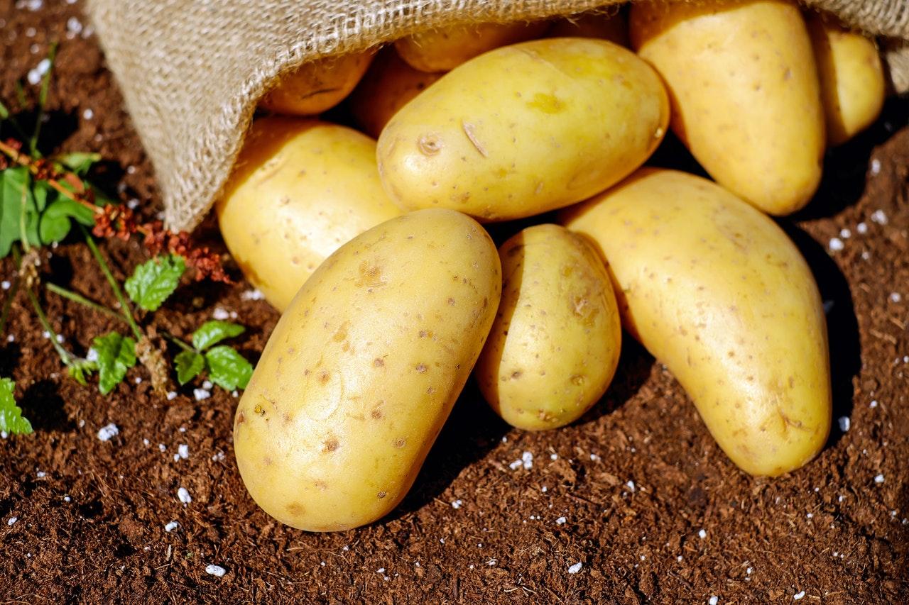 tour à patates pour le jardin